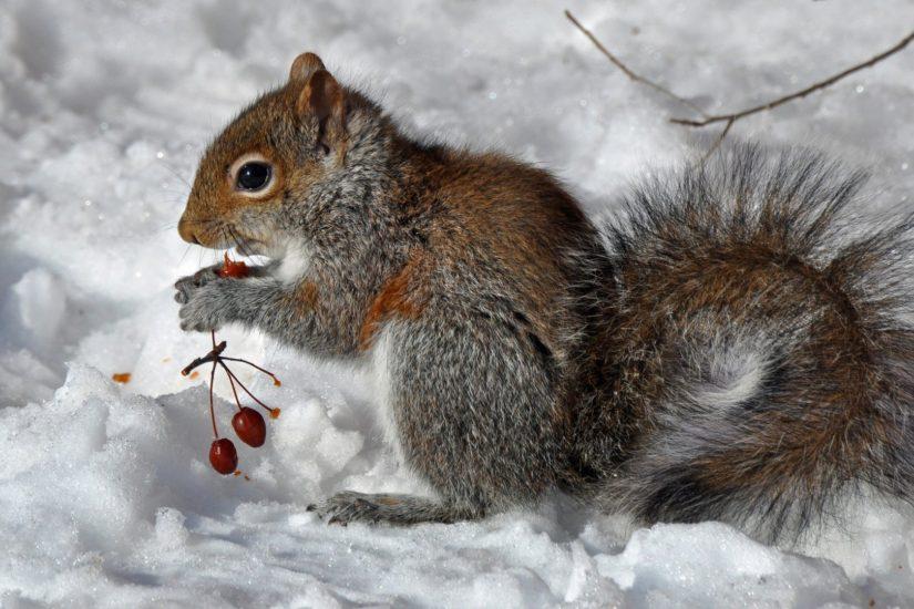 Egzotikus mókusok